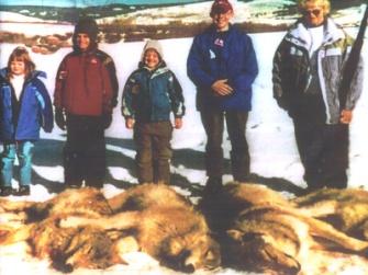 wolves-killed-in-polaris