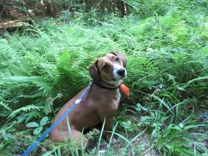 Luka in the ferns