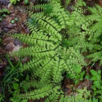 Sex and the Secret Life of Ferns